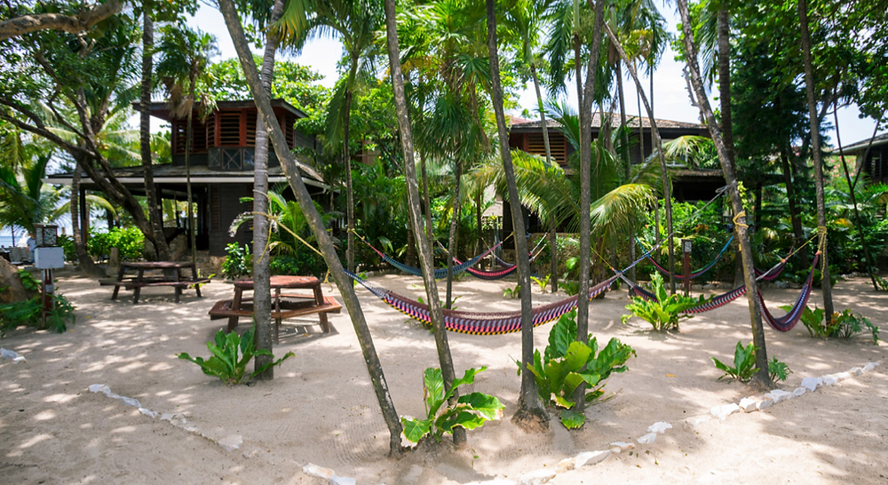 Colorful hammocks hung between palm trees in the sandy, shaded common area of Bananarama.