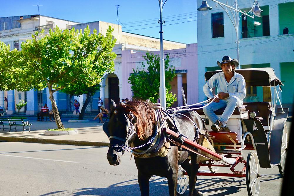 Cuban man driving a horse drawn carriage.