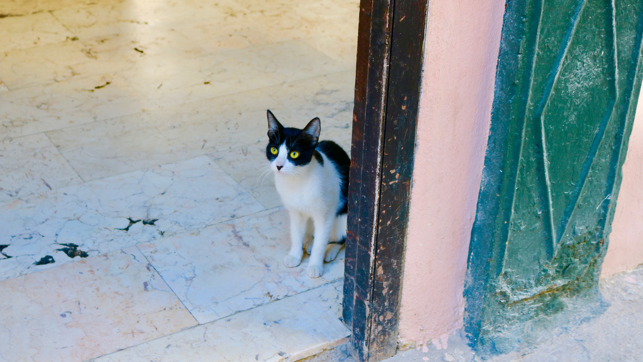 Black and white cat in doorway in Old Havana.