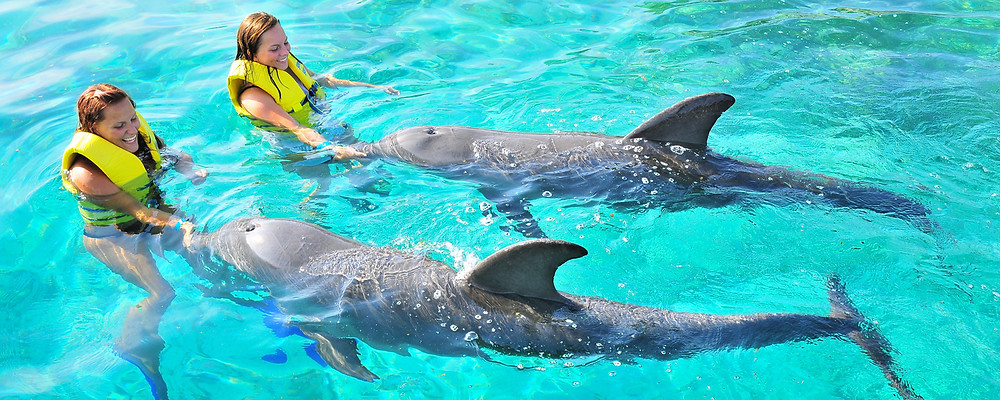 Two women in yellow life jackets petting two dolphins at Anthony Key's Resort.