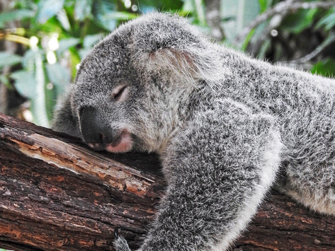 What You Need to Know Before Traveling to Australia