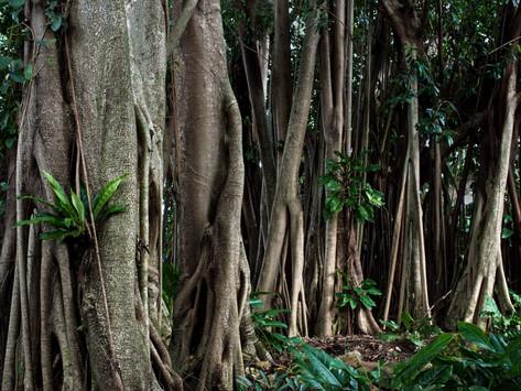 How to Enjoy a Budget-Friendly Trip to Cairns, Australia