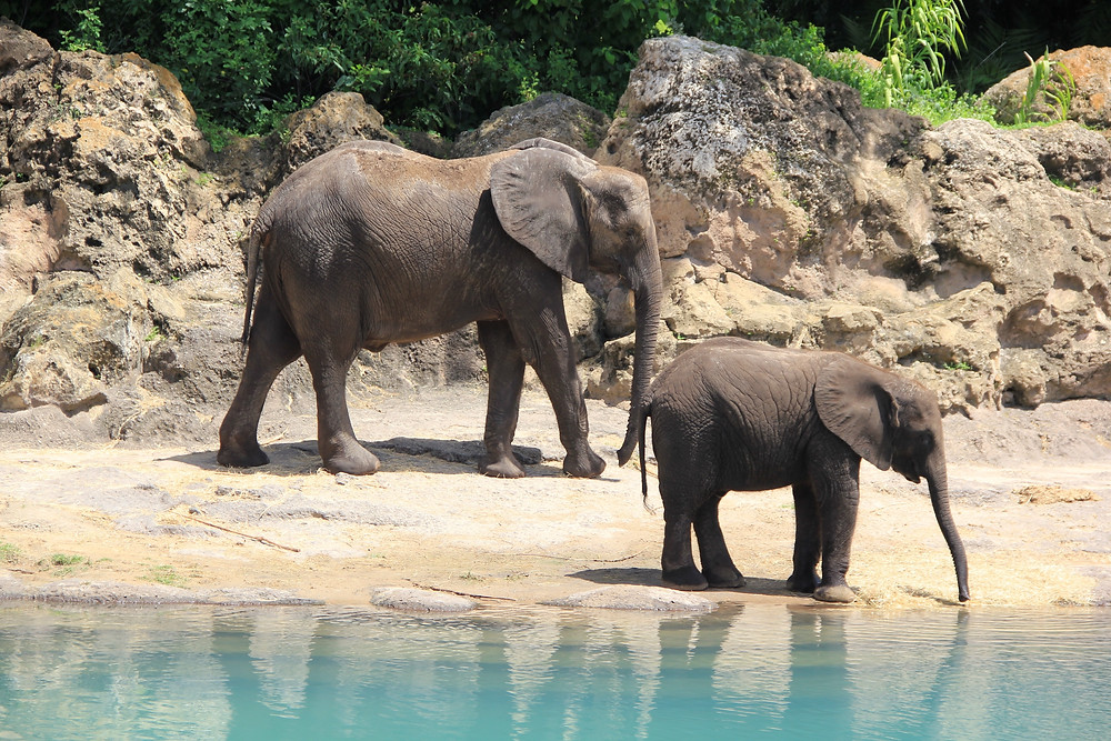 Mother and baby elephant benefiting from volunteer tourism