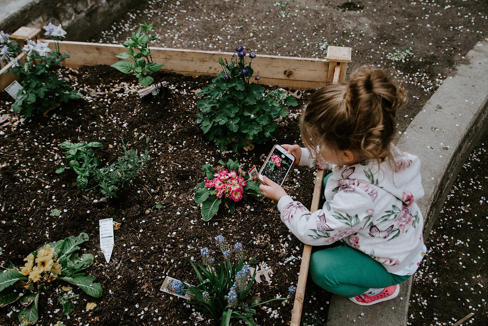 Little girl planting seeds at Fenway Victory Gardens