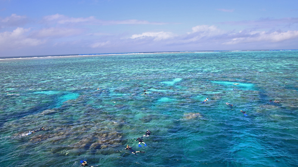 Snorkeling the Great Barrier Reef with Down Under Dives