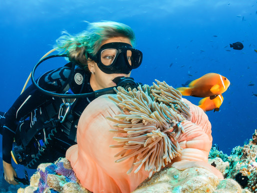 12 Essential Tips for an Amazing Scuba Diving Vacation