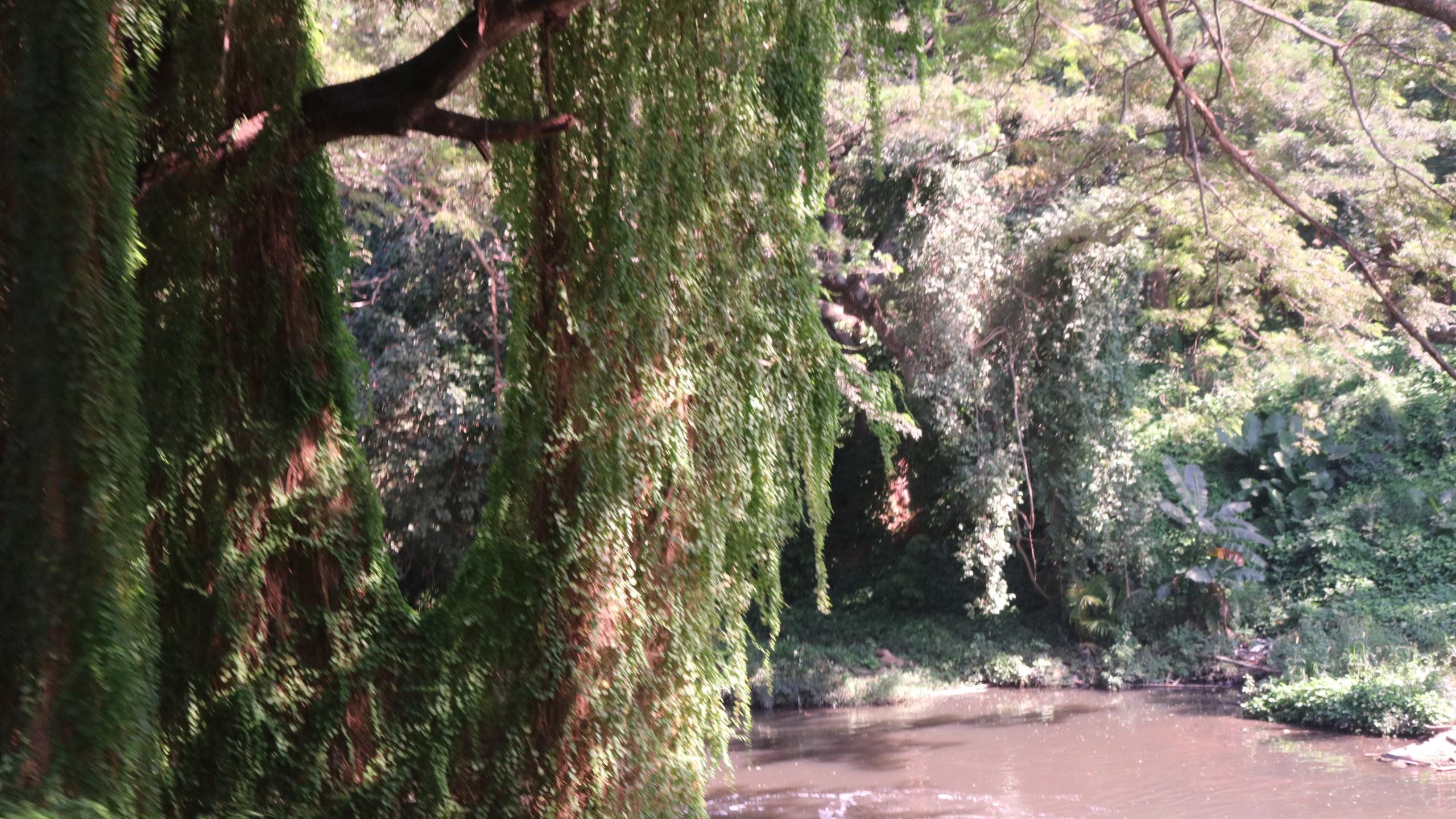 Almendares River running beside the Havana Forest.