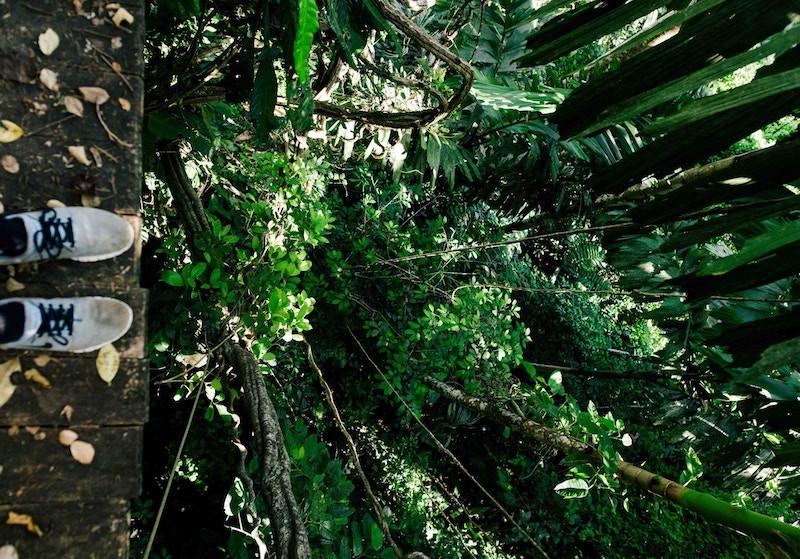 Costa Rica jungle hike