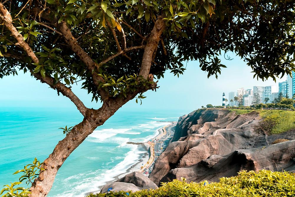 Trees reaching over the coast of Peru's Miraflores neighborhood.