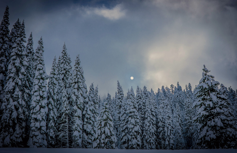 Full moon over snow covered trees at Alpine Meadows at sunset.