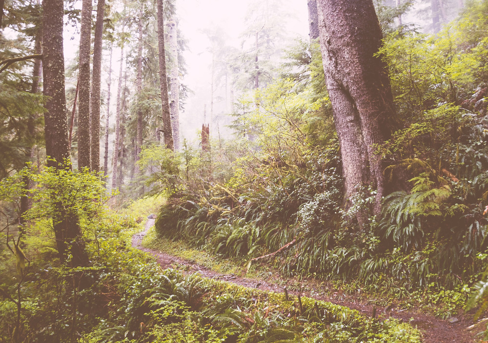 Trail through an Oregon forest in Cape Lookout State Park.