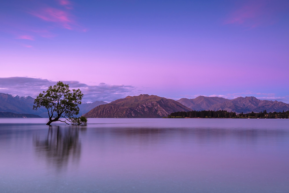 Purple and black image of the Alone Tree at Lake Wanaka