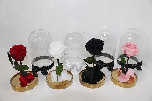 campana con rosa Vera