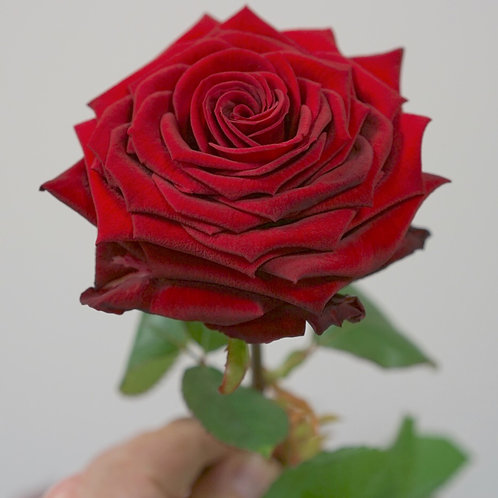 Mazzo Rose vere Stabilizzate
