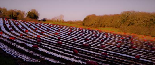 Soleil couchant éclairant les sacs de pomme de terre à planter. Près de Daoulas (29).