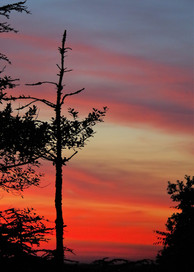 De la colline de Pencran (29) vue sur Landerneau et ses rougeoiements. Au premier plan cete arbre dégarni qui apporte un élément visuel intéressant.