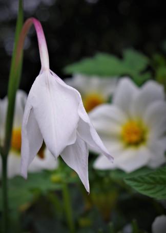 Harmonie blanche