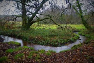 Toujours un arbre quand ça serpente! Langoëlan rivière du Rest (56).