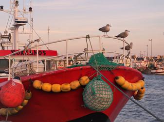 Aiguilleurs de la mer