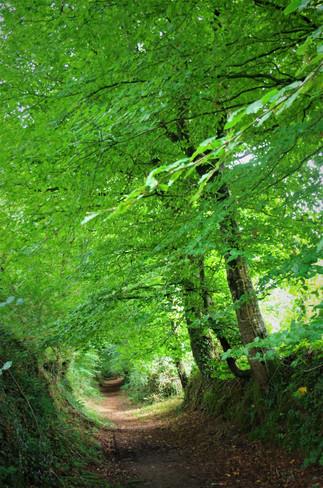 Pas de chemin creux sans arbres .