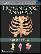Human Gross Anatomy.jpg