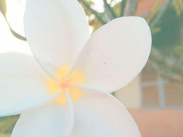 Këoana Flowers