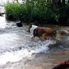 07-16 Tigger water2.jpg