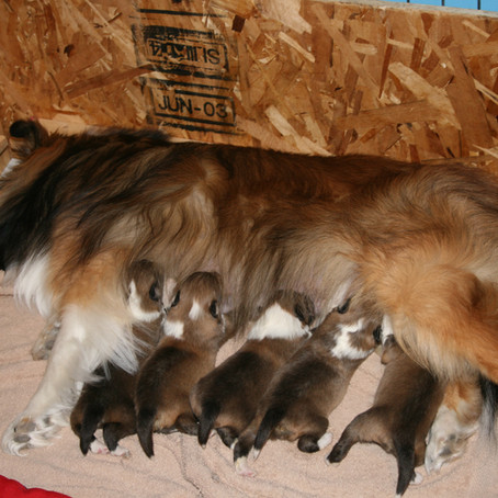 So You Want To Be A Breeder?