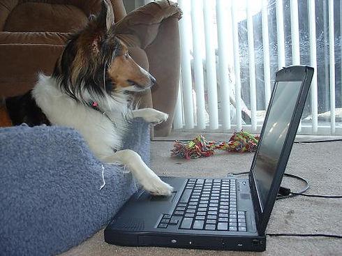 & Laptop.JPG