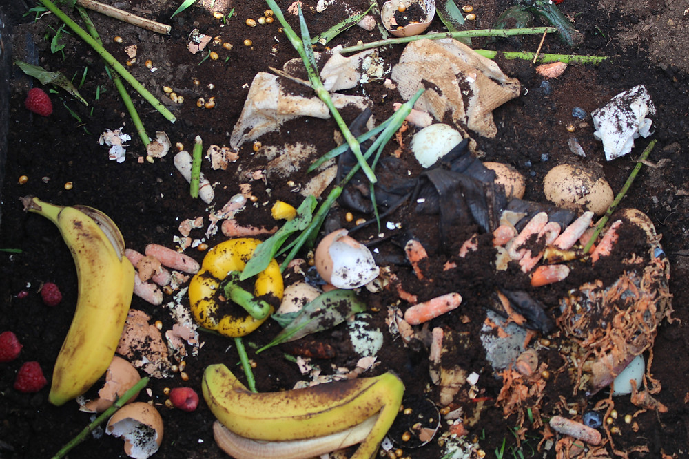 Banana peels, carrots, egg shells, veggies pieces, flower clippings (mothers day), coffee grounds, tea bags etc