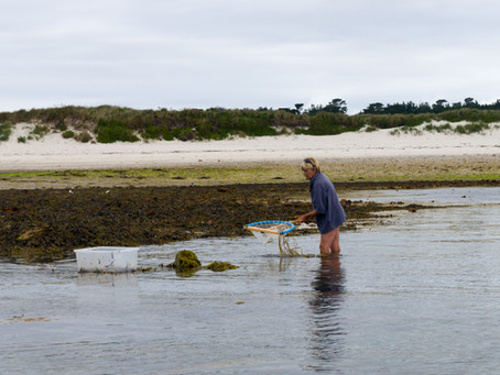 Shrimp Season - shrimps for tea.