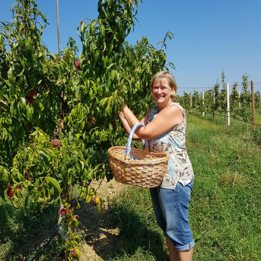 Karin Niegl bei der Pfirsichernte