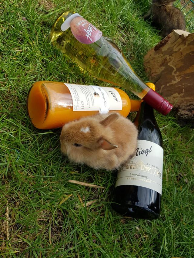 Der Osterhase war zu Besuch im Weingut Niegl