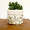 Thumbnail: Manifest Multi-Colour Plant Pot Cover