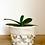 Thumbnail: Manifest Multi-Colour Plant Pot Cover