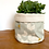 Thumbnail: Manifest Turquoise Plant Pot Covers