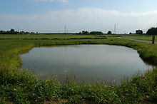 Ponds_24.jpg