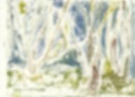 woodland b4_edited.jpg