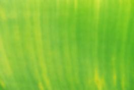 scott-webb-249013-unsplash.jpg