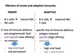 Innate immunity is the cornerstone of herd immunity against acute viral infections