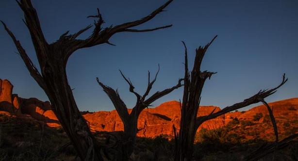 Dead Trees Againt Orange Hills