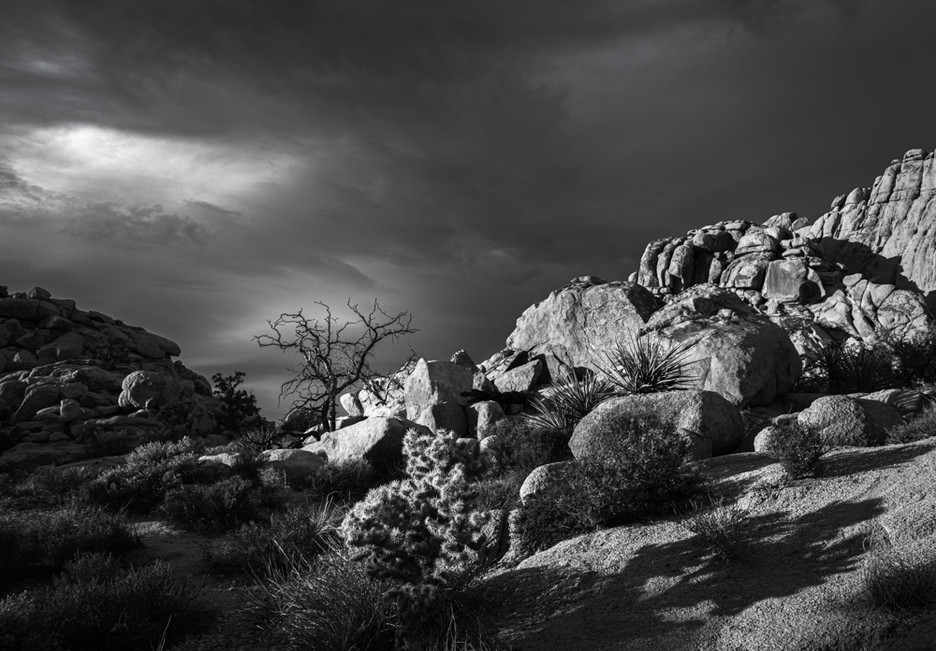Tree With Boulders #1