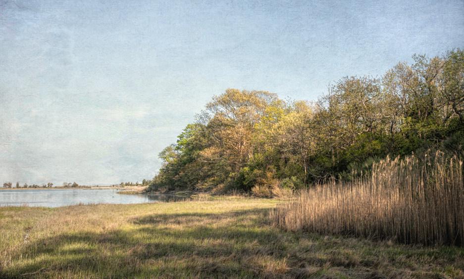 Spring Foliage, Dam Pond