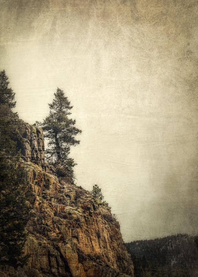 Rocky Mountain Tree #3