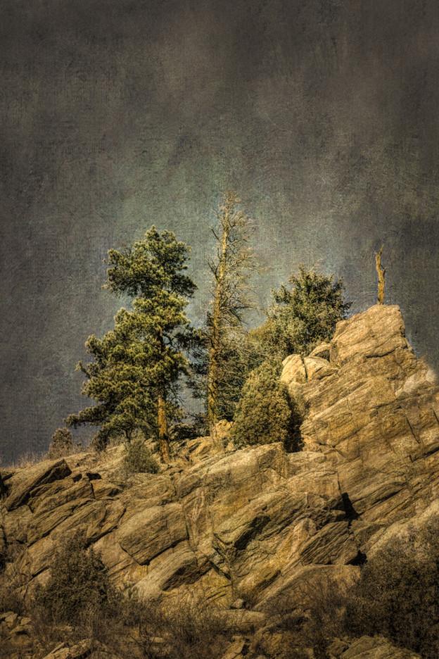 Rocky Mountain Tree #5