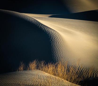 Sand Dune with Brush