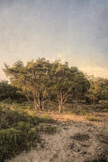 Sea Trees #1