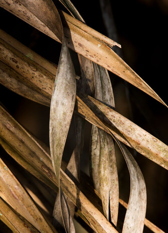 Palm Frond #4