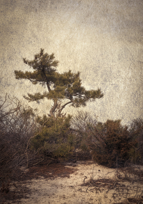 Tree on Dune #1