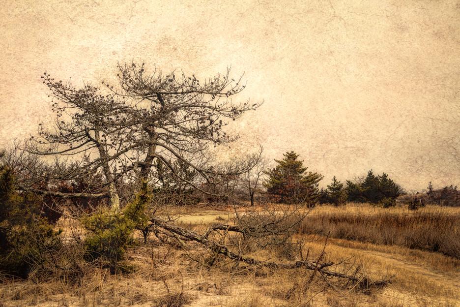 Tree on Dune #2